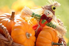 Scarecrow. And pumpkins on colorful autumn background Stock Image