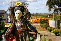 Scarecrow with Pumpkins Royalty Free Stock Photo