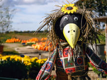 Scarecrow with Pumpkins Royalty Free Stock Photography