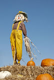 Scarecrow and Pumpkins Sky Background Royalty Free Stock Photography