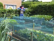 Scarecrow with red scarf. Scaring crows out of the vegetable patch Stock Photos