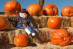 Scarecrow Resting on Hay Bales with Pumpkins Stock Images