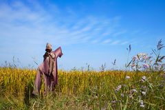 Scarecrow on a rice field Stock Photography