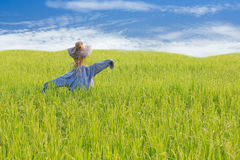 Scarecrow on rice field royalty free stock images