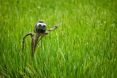 Scarecrow on rice field Royalty Free Stock Photography