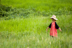 Scarecrow in a rice field at Pai, Thailand Royalty Free Stock Photos
