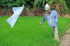 Scarecrow at rice field, prevent bird eat rice seeds Royalty Free Stock Image