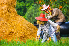 Scarecrow in a Rice Field Stock Photo