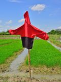 Scarecrow in the rice filed. Stock Photos