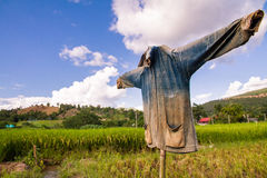 Scarecrow in rice paddies of northern Thailand. Stock Images