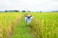 Scarecrow in ricefield Royalty Free Stock Photos