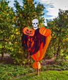 Scarecrow skull with pumpkins. In a park outside in a sunny day royalty free stock photos