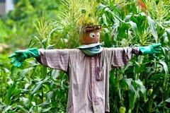 Cute scarecrow in cornfield stock image