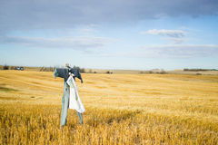 Scarecrow Stands Post Stock Image