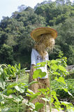 Scarecrow, straw man at the farm. Scarecrow, straw man at the sun set farm Stock Photography