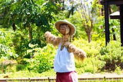 Scarecrow or straw-man. Made to guard the fields, thailand, asian Royalty Free Stock Photos