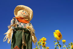 Scarecrow in a Sunflower Field Royalty Free Stock Photography
