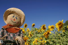 Scarecrow in the Sunflower Forest. A scarecrow watches over a sunflower forest Royalty Free Stock Image