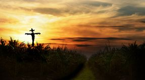 Scarecrow at sunset. Next to yellow brick road and cornfield royalty free stock photography