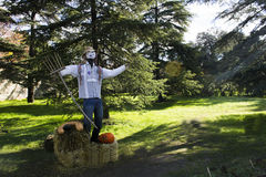 A scarecrow take caring the grow Royalty Free Stock Image
