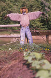 Scarecrow in tobacco field Stock Image