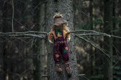 Scarecrow in a tree in a shadowed forest royalty free stock image