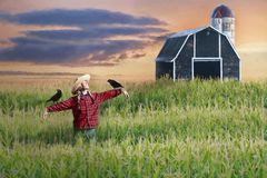 Scarecrow and barn. Scarecrow with two birds in field with barn royalty free stock images