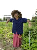 Scarecrow in a vegetable farm Royalty Free Stock Photo