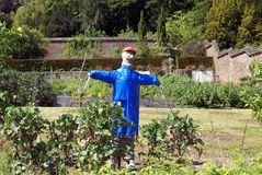 Scarecrow in a vegetable garden Royalty Free Stock Photo