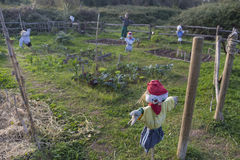 Scarecrow in a vegetable garden Stock Images