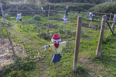 Scarecrow in a vegetable garden Royalty Free Stock Image