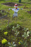 Scarecrow in a vegetable garden in a countryside Royalty Free Stock Photo