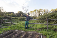 Scarecrow in a vegetable garden in a countryside Royalty Free Stock Image