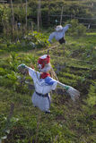 Scarecrow in a vegetable garden in a countryside Stock Photo