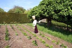 Scarecrow in a vegetable garden Royalty Free Stock Images