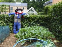 Scarecrow. In the vegetable patch Royalty Free Stock Photography