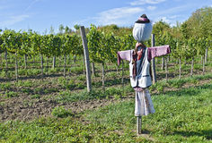 Scarecrow at a vineyard Royalty Free Stock Images