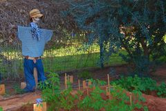 Scarecrow. A scarecrow watching a vegetable garden planted by Kibbutz preschool children Royalty Free Stock Photo