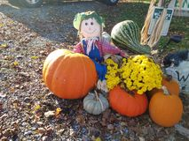 Scarecrow welcome with pumpkins,flowers. Happy scarecrow welcome wth pumpkins  and flowers Royalty Free Stock Photo