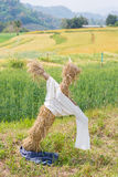 Scarecrow in the wheat field Royalty Free Stock Photography