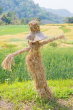 Scarecrow in the wheat field Stock Photography
