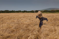 Scarecrow in a wheat field Stock Photography