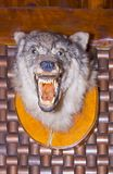 Scarecrow of a wolf on a wooden wall. Close up Stock Images