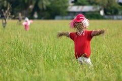 Scarecrowen i rice sätter in royaltyfri foto