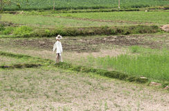 Scarecrows. Dressed in white on the cornfield Stock Images
