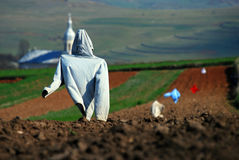 Scarecrows on a field Stock Image