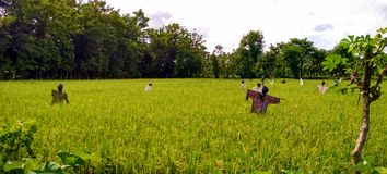 The scarecrows of the field Stock Photos