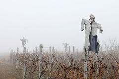 Scarecrows in the Fog. Ugly scarecrows dressed with old clothes standing in a dry vineyard in a foggy weather Stock Image