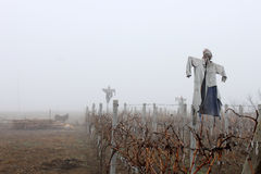 Scarecrows in the Fog. Ugly scarecrows dressed with old clothes standing in a dry vineyard in a foggy weather Royalty Free Stock Photo
