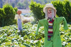 Scarecrows in the open field royalty free stock image